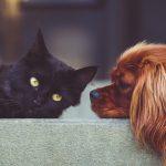 kissa-ja-koira-pixabay