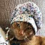 myssypainen-kissa-kuvat