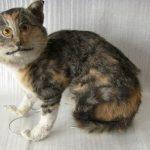 taytetyt-kissat-kuvat